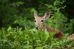 Deer_BlogPost