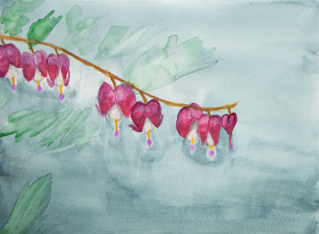 gouache painting of a branch from a bleeding heart plant